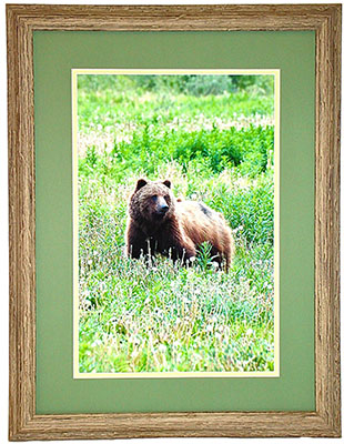 wildlife-bear-310×400